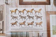 画像14: 「即納J」はぎれ70×50:乗馬(額デコレーション)/105g (14)