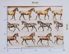 画像4: 「即納J」はぎれ70×50:乗馬(額デコレーション)/105g (4)