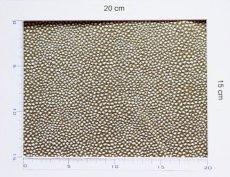 画像3: 「取寄せ」布:ベルーガ(ジャカード、 カーキ)/460g (3)